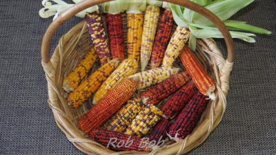 how to make corn more digestible